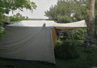 katz-auf-dem heissen zeltdach